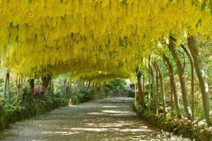 Bodnant Gardens